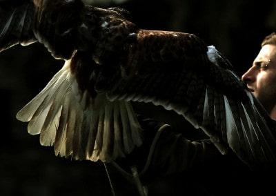 Il FalconiereCastello di Vezio, Perledo
